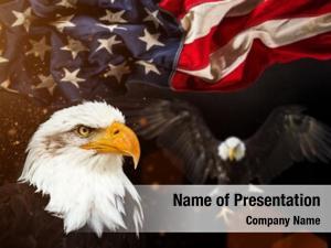 Bald north american eagle american