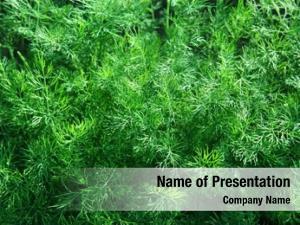 Green fennel powerpoint background