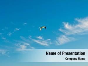 Flying white dove sky