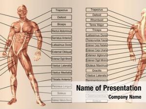 Man concept human anatomy muscle