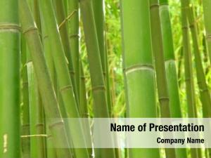 Grove green bamboo