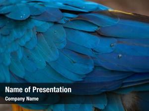 Blue and yellow macaw blue and yellow macaw ara