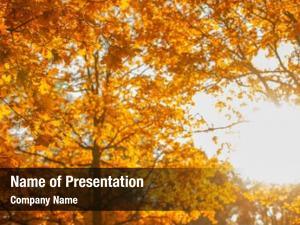 Leaves fall, autumn,