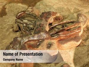 Skeleton exploration dinosaur thailand