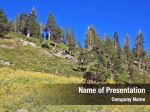 Trees grassy hillside pine trees