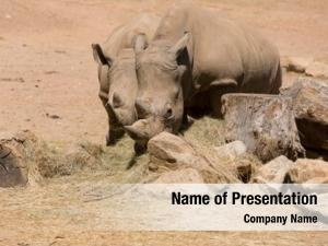 Wildlife two african safari rhinoceros