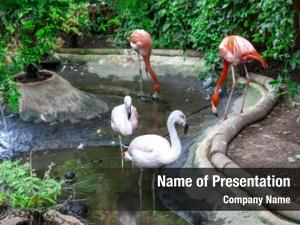500 Zoo Powerpoint Templates Powerpoint Backgrounds For Zoo Presentation