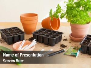 Home gardening, planting