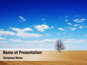Dry alone tree field