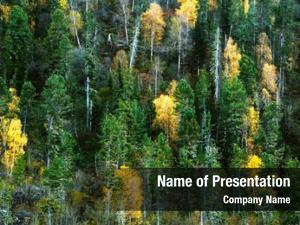 Woods forest autumn