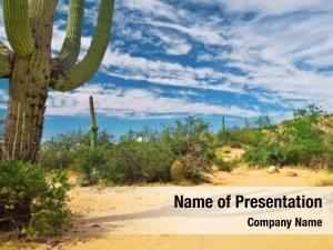 Botany cactus plant desert growing