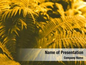 Natural fern leaves background, beautiful