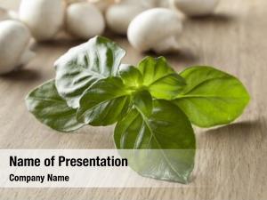 Green fresh raw mushroom plant