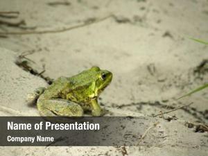 Frog beautiful green