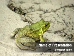 Beautiful green frog