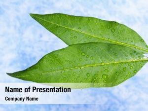 Plant fresh green leaves blue