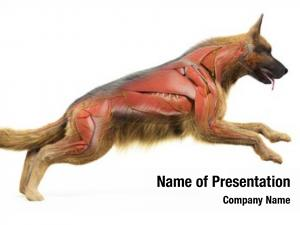Accurate rendered medically dogs muscular