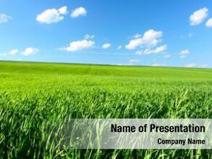 Grass meadow green blue sky