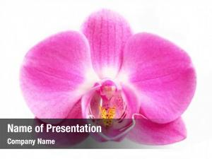 Flower pink orchid white