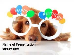 Wearing dachshund puppy happy birthday