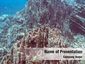 Coral underwater view reef tropical