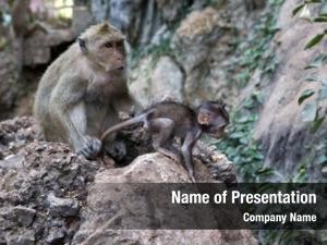 Baby mother monkey monkey green