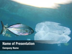 Contaminates plastic pollution seafood