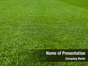 Shallow green grass depth field