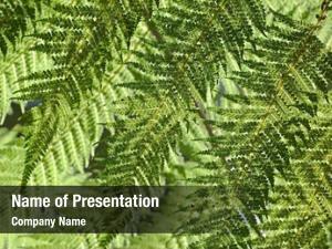 Fresh fern leaves green plant