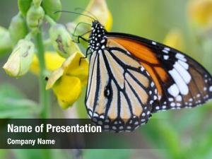 Monarch close orange butterfly