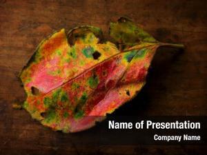 Leaf autumn persimmon artistic colors