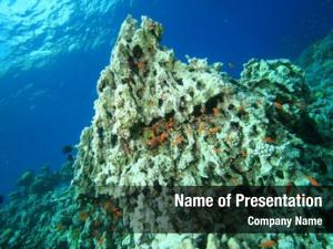Coral environmental problem: killed global
