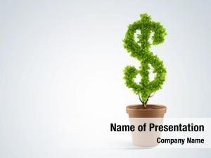 Plant dollar tree pot