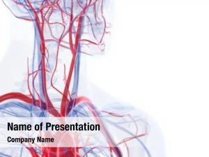 Accurate rendered medically blood vessels