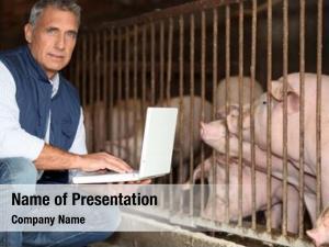 Pigs man breeding
