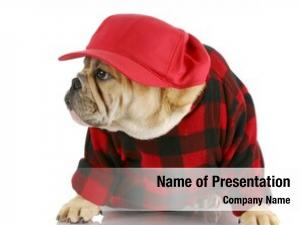 Bulldog adorable english wearing trucker