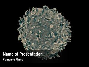Cells white blood (wbcs), also