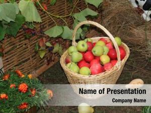 Rural apple basket market