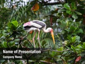 Tree painted stork top