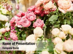Varieties selection different roses flower