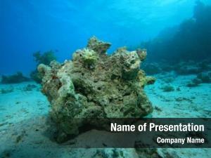 Dead environmental problem coral reef