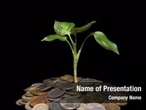 Black coins plant