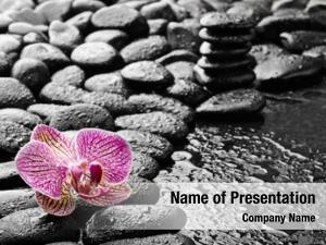 Pink basalt stones single orchid