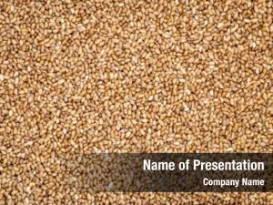 Teff gluten free grain important