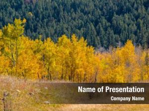 Trees autumn aspen colorado, usa