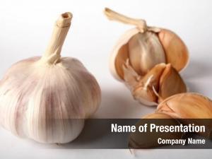 Garlic still life bulb next