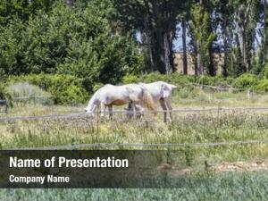 Grazing group horses green pasture,