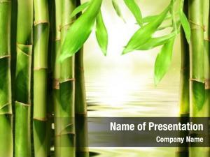 Water bamboo shoots