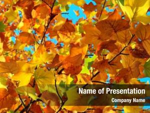 Colors autumn fall