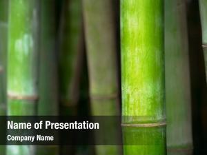 Bamboo bamboo close grove